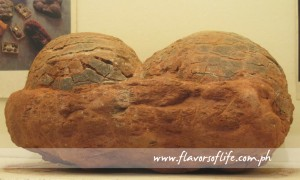 Fossilized dinosaur eggs, which can be found inside Museo Arqueologico, are believed to be 146 to 65 million years old