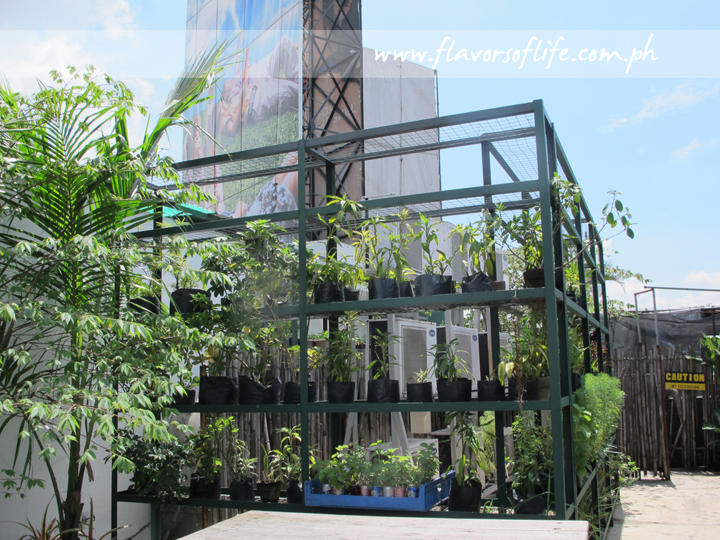 Part of the organic garden at the eco center on the rooftop of Cravings-Katipunan
