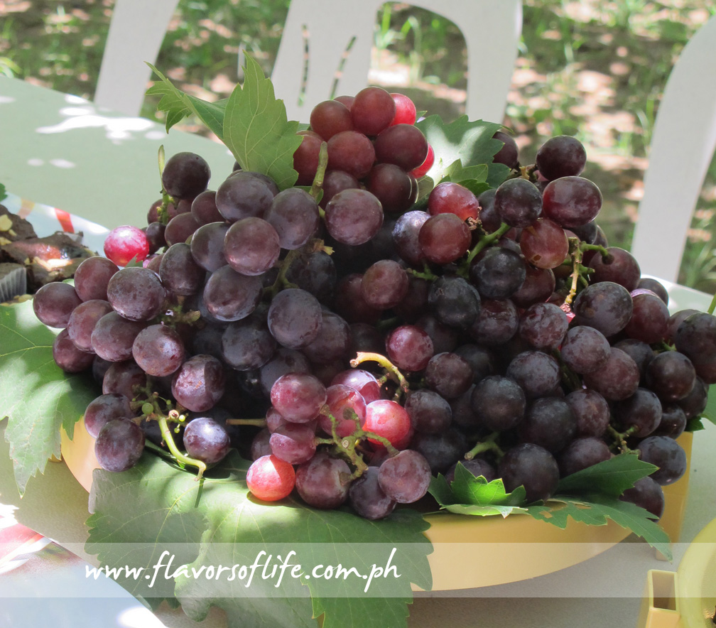 Freshly Picked grapes from Gapuz Grapes Farm can be enjoyed in a picnic setting under a canopy of grape vines
