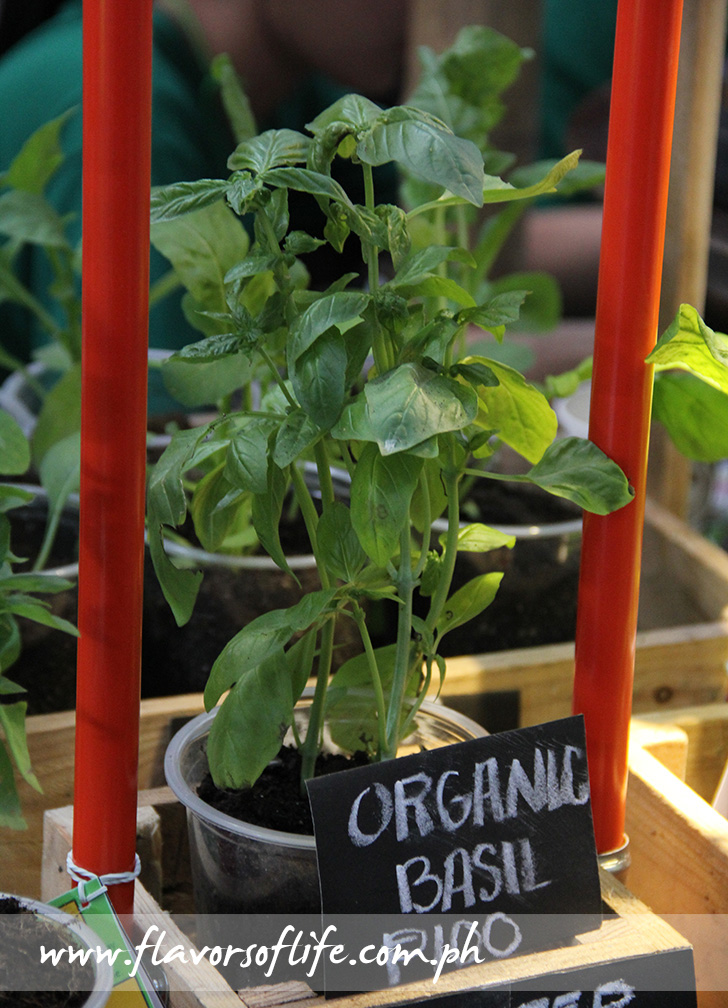 Organic basil plant by Farm-in-a-Box